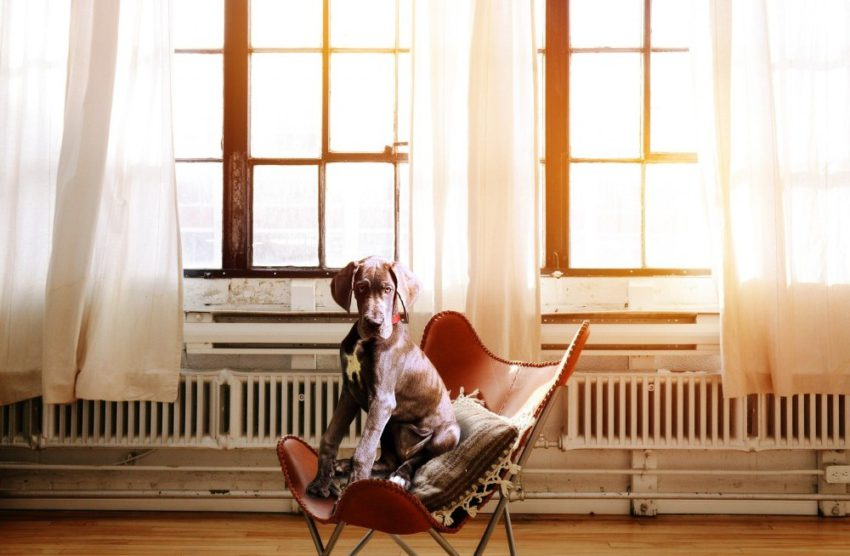 house-and-pet-sitting-joy-to-travel-and-serve